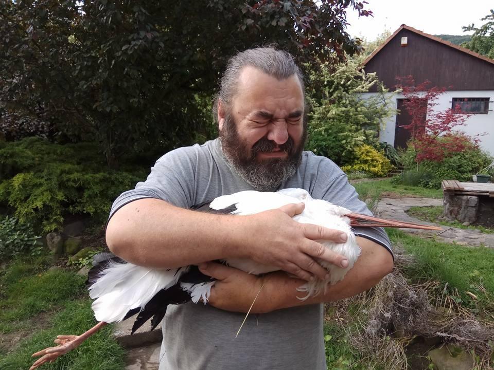 Megrázó bejegyzésben búcsúztak a gólyától, akivel egy középfeszültségű vezeték végzett