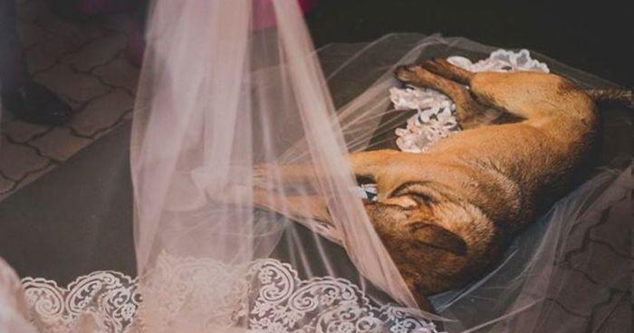 Kóbor kutya toppant be váratlanul az esküvőre