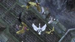 EverQuest II - kacsameséket akarunk! kép