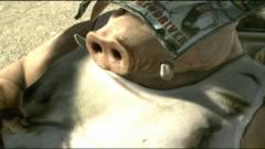 Beyond Good & Evil 2 - a készítő közzétett egy képet, és mindenki lázba jött kép