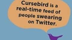 Nézegess pingvineket a Google segítségével! kép
