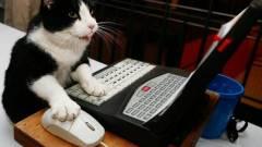 Még mindig a pornó a legfertőzőbb webes tartalom kép