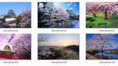 Napi tipp: Cherry Blossom téma Windows 7-hez kép