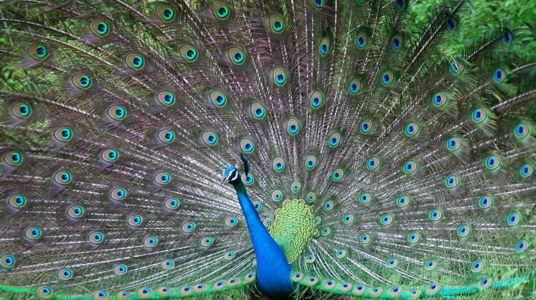 Hogyan használjuk az új Beautiful Birds és Echoes of the Past témákat Windows 7 alatt? kép