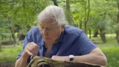 David Attenborough a BBC karanténiskoláján keresztül oktatja a gyerekeket kép