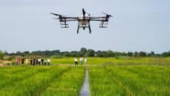 Drónok pásztázták a MATE rizsföldjeit kép