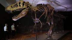 Rekord összegért vásárolták meg egy T-rex csontvázát kép
