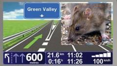 Patkányok tájékozódása alapján fejlődhet a GPS kép
