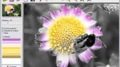 Képmanipuláció: fekete-fehér háttér, színes főtéma egyszerűen  kép