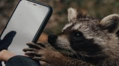 A Raccoon Stealer kampány kriptobányászatot folytat és lop is kép