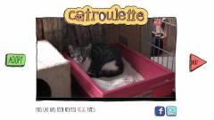Itt a cicás Chatroulette kép