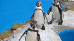 Már tölthető a Linux 3.10 kép