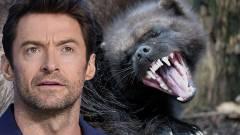 Hugh Jackman úgy vállalta el a szerepet, hogy nem is tudta, a rozsomák egy létező állat kép