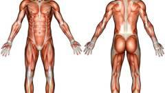 4 dimenziós anatómiai program a közoktatásban kép