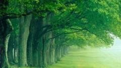 Erdőgazdaságok intelligens vagyonvédelmi rendszere kép