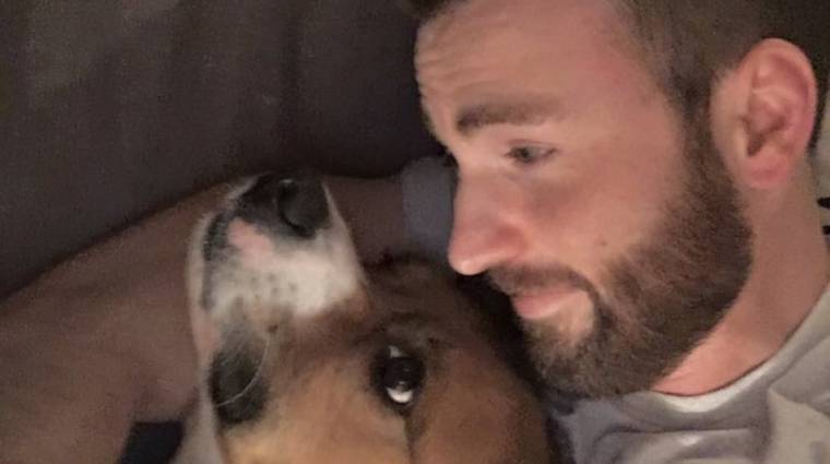 Napi büntetés: Chris Evans meztelen képet posztolt, úgyhogy az internet tele van... a kutyás fotóival bevezetőkép
