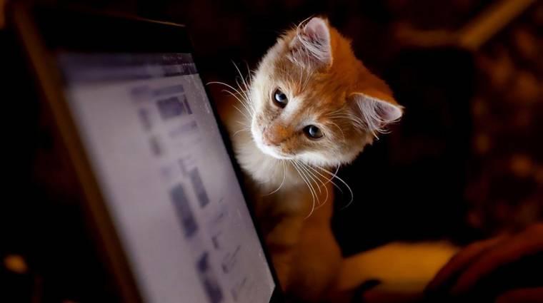 Napi büntetés: lehalt a streamer gépe, mikor a macskája élő adás közben belehányt bevezetőkép