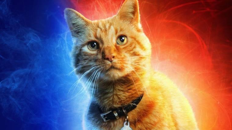 Őrült teória látott napvilágot a Marvel Kapitány cuki cicájáról kép
