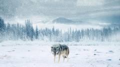 Örök tél beszámoló - ezt kell tudni a Félvilág alkotóinak új filmjéről kép
