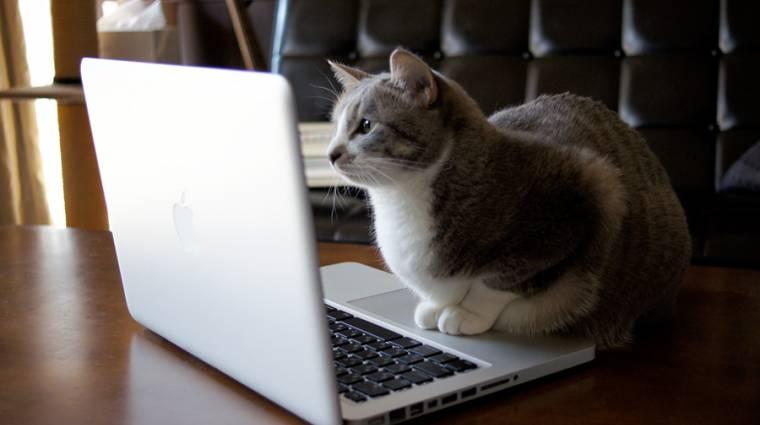 Így tartsd szemmel a macskádat Skype-on keresztül kép
