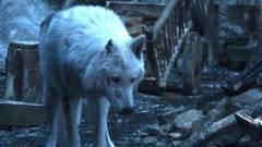Rémfarkasok és Starkok is lesznek a Trónok harca előzménysorozatában kép