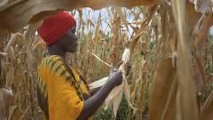 IoT-vel az éhezés ellen Afrikában kép