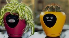 Ez a cserép tamagocsit csinál a növényedből kép