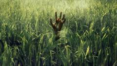 In the Tall Grass - parás traileren a Netflix Stephen King-adaptációja kép