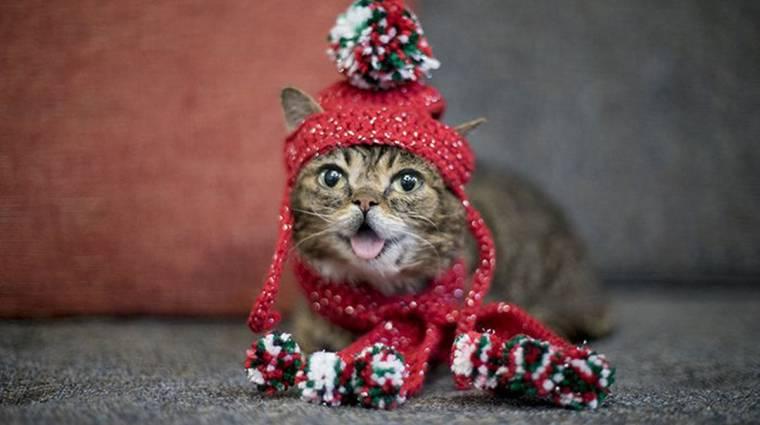Elpusztult Lil Bub, az internet legaranyosabb cicája bevezetőkép