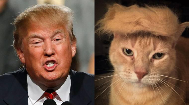 Ez a Chrome bővítvény macskákra cseréli a politikusokat kép