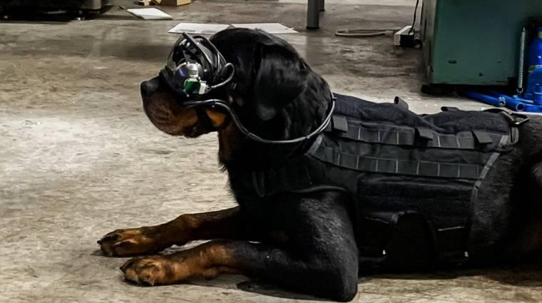 Kiterjesztett valóság kutyáknak: Amerikában már tesztelik kép