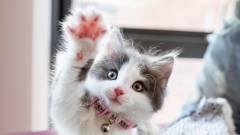 Nem macska vagyok – hangzott el 2021 már most legfontosabb Zoomon streamelt tárgyalásán kép