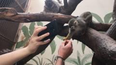 Állatkerti kedvencekkel dobhatod fel a videohívásaidat, és egyúttal segíteni is tudsz rajtuk kép