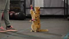 Így dolgoznak együtt cicákkal a videojátékos trailerek magyar mesterei kép