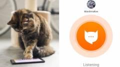 Ez az app lefordítja, hogy mit mond a macskád kép