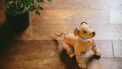 A Sony Aibo robotja már alig várja, hogy hazaérj kép