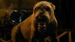 A kommandós Megan Fox CGI-oroszlánokkal küzd meg kép