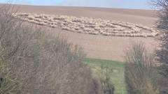 X-akták - halálra rémült egy brit falu a juhok bizarr felállása miatt kép