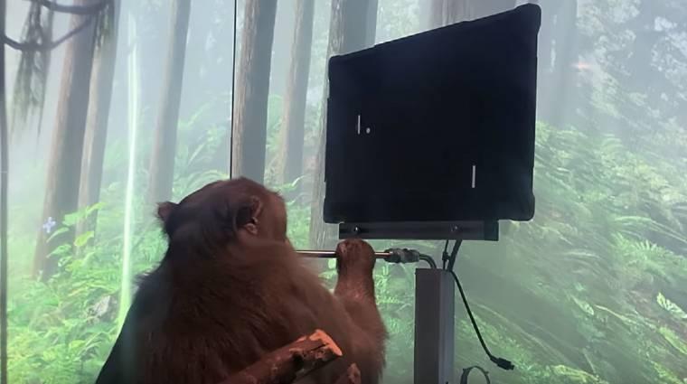 Ha hihetünk Elon Musk cégének, akkor ez a majom az elméjével pongozott kép