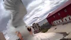 Újabb fejezetéhez ért a drónok és sirályok harca kép