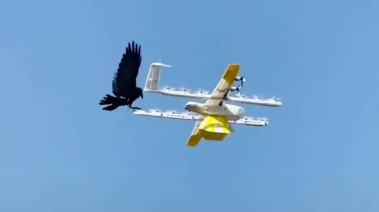 Lázad a természet: hollótámadás érte a Google kávészállító drónját kép