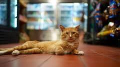 Napi büntetés: a pofátlan macskák Twittere biztosan feldobja a napod kép