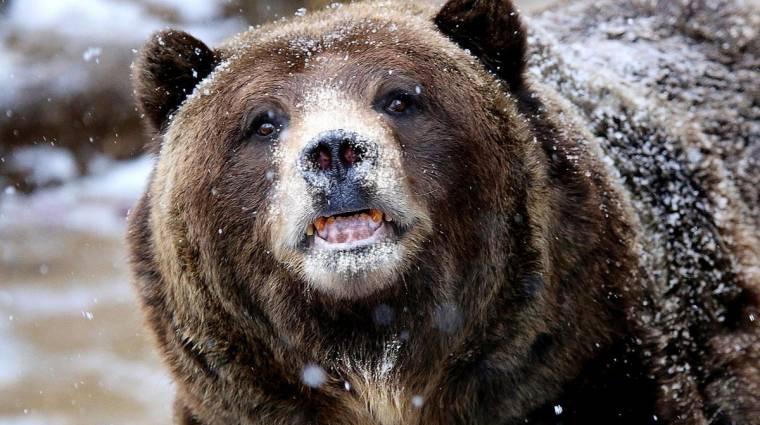 Összeállt a kokainfüggő medvéről szóló film stábja kép