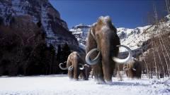 Jurassic Park-szerű kísérlettel hoznák vissza a gyapjas mamutot kép