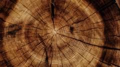 Fákból kivont anyag teheti környezetkímélőbbé a jövő akkumulátorait kép