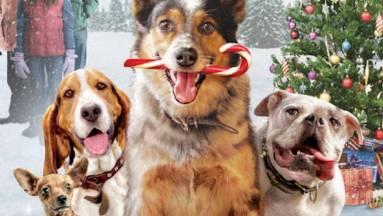Jön a Reszkessetek betörők kutyákkal kép