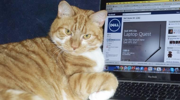Macskavizelet illatú laptopok a Delltől kép