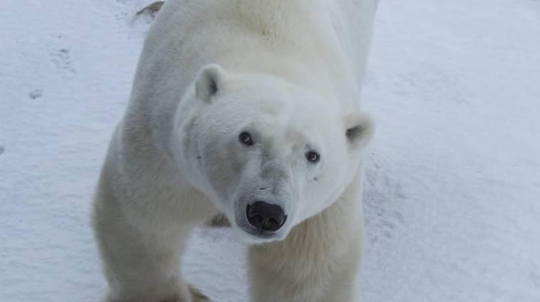 A jegesmedvékhez látogatott a Google Maps kép