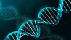 A szegénység árt a DNS-nek kép