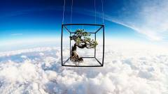 Exobiotanica: az űrutazó bonsai története kép